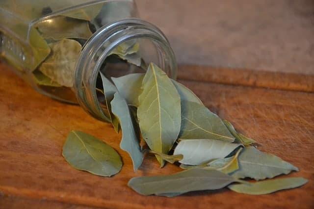 El aceite esencial laurel propiedades y usos