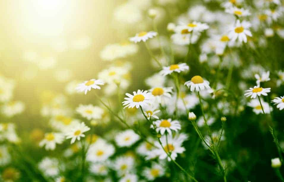 La astenia primaveral y aromaterapia